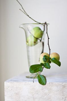 quince + beaker Reminds me to the idea of guava's in a bouquet. What amazing smells that would give off! Ikebana, Arte Floral, Summer Flowers, Amazing Flowers, Belle Photo, Simply Beautiful, Floral Arrangements, Flower Arrangement, A Table