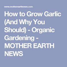How to Grow Garlic (And Why You Should) - Organic Gardening - MOTHER EARTH NEWS