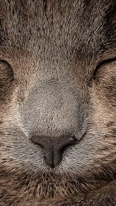 Tier Wallpaper, Cat Wallpaper, Wallpaper Awesome, Animal Wallpaper, Beautiful Cats, Animals Beautiful, Cute Cats, Funny Cats, Animals And Pets