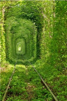 Train tree tunnel, Ukraine.
