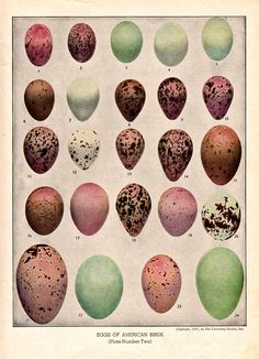 Free Vintage Clip Art - Birds Eggs - The Graphics Fairy