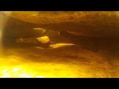 Probando SJ4000 bajo el agua