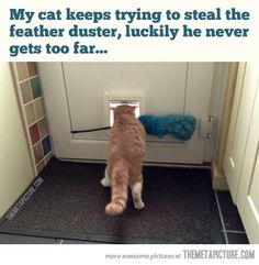 Feather duster thief…