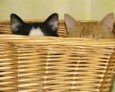 We're all ears #animalbffs
