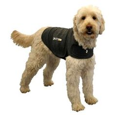 """The Thundershirt is a pressure wrap, meaning it exerts a firm yet comfortable uniform pressure on the body. It calms dogs in the same way swaddling calms infants. According to the manufacturer, a survey of users showed that """"over 85% percent of dogs showed significant improvement in at least one anxiety symptom when using Thundershirt."""" It can help calm dogs who are terrified of thunder, nervous about nail clipping, or anxious when left alone. It can allay other fears as well, including…"""