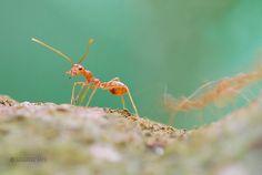 ant, via 500px