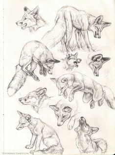 to drawing fox Art. Animal Sketches, Animal Drawings, Art Drawings, Fox Drawing, Drawing Sketches, Tattoo Sketches, Drawing Tips, Sketching, Fox Anatomy