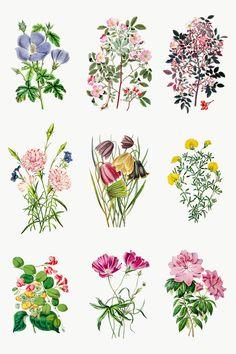 Botanical Flowers, Exotic Flowers, Tropical Flowers, Yellow Flowers, Printable Designs, Printable Stickers, Blue Hibiscus, Cute Emoji, Envelope Design