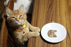 Cute Cats, Funny Cats, Animals And Pets, Cute Animals, Kitten Mittens, Orange Tabby Cats, Ginger Cats, Cat Food, Beautiful Cats