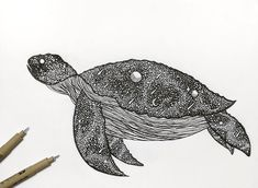 #turtle  #space