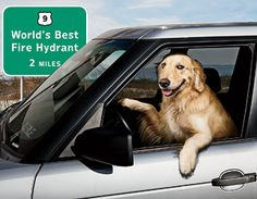 Some good tips for taking your dog on a roadtrip - Car Travel with Your Dog from Prevention.com