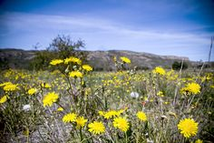 Explota la primavera en Chulilla