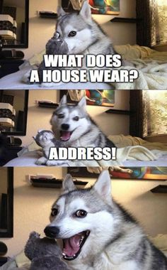 New Funny Puns Jokes Humor Laughing Harry Potter Ideas Dog Jokes, Puns Jokes, Corny Jokes, Funny Animal Jokes, Funny Dog Memes, Cute Funny Animals, Funny Animal Pictures, Animal Memes, Puns Hilarious