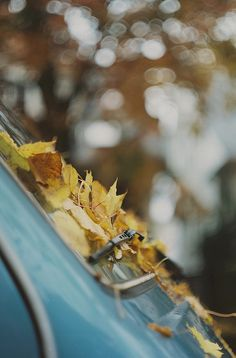 Autumn VW !