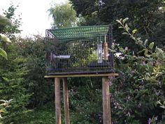 Dog Crate Feeding Station Success – www.wildlifekate.co.uk Caged Bird Feeders, Wild Bird Feeders, Ground Bird Feeder, Bird Feeder Stands, Platform Bird Feeder, Backyard Birds, Backyard Ideas, Garden Ideas, Outdoor Ideas