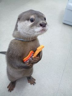 I've seen an otter with a guitar. My day is done now. Good night