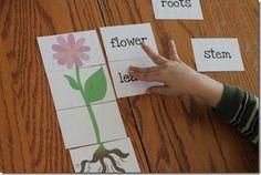 Garden home school printables