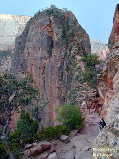 Angels Landing!  I climbed this and stood on the top.