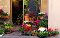 Flower Shop - Lucca, Italy