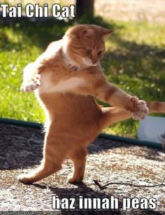 Tai Chi Cat haz innah peas