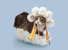 #Cats Dressed as #Sushi Rolls