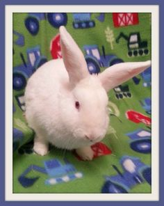 Hagrid #rabbit #rescue #adoptdontshop