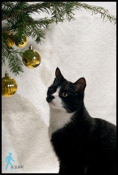 Christmas Cat by wlkr on DeviantArt Christmas Cats, Dog Cat, Deviantart, Artist, Artwork, Animals, Events, Babies, Holidays