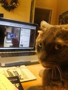 Cats Hate Webcams http://ift.tt/1W1ymBT