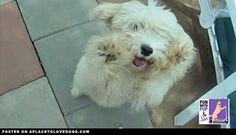 Gangnam Doggy Style | Video • dog dogs puppy puppies cute doggy doggies adorable funny fun silly photography