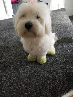 Miss Harper Green Paws After A Day In The Garden Small Dog Breeds