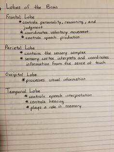 lobes of the brain Nursing Student Tips, Nursing School Notes, Medical School, Nursing Students, Medical Coding, Medical Science, Medicine Notes, Fundamentals Of Nursing, Medical Anatomy