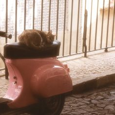 {kitten sleeping on a Vespa} that cat's got mad style!