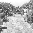 On November 2, 1920, a settlement in Florida was the stage of a race riot that saw almost 60 Black citizens killed. The Ocoee Massacre would result in significant population change that would remain inOn November 2, 1920, a settlement in Florida was the stage of a race riot that saw almost 60 Black citizens killed. The Ocoee Massacre would result in significant population change that would remain in the 1980s.   Election Day 1920 The cause of the Ocoee Massacre was the outcome of the…