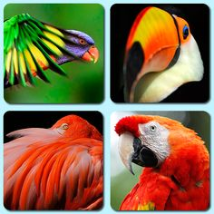 Set of real, pulpwood beer mats depicting four colourful, exotic birds. These examples are square with rounded corners and 1200 micron thick. Beer Mats, Litho Print, Exotic Birds, Parrot, Dog Cat, Printed, Nature, Animals, Birds