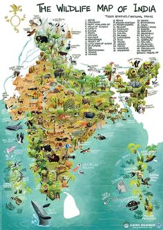 Dr Rohan Chakravorty illustrates the country's lush forests, wetlands and wildlife through beautiful caricatures. Where to travel to in India based on this map? Travel Maps, India Travel, Places To Travel, Places To Visit, India Poster, India Map, Wildlife Of India, Wildlife Nature, India Facts