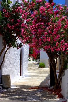 Greece, again. White walls, blue skies, hot pink flowers and that dappled Mediterranean light.