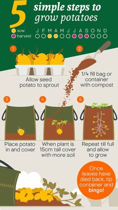 Whether you like them mashed, roasted or fried, check out our super easy spud growing guide to find out how you can cultivate these versatile veggies, in your very own outdoor space. Growing Veggies, Growing Plants, Potato Growing Containers, Growing Tomatoes, Organic Gardening, Gardening Tips, Veg Patch, Home Vegetable Garden, Veggie Gardens