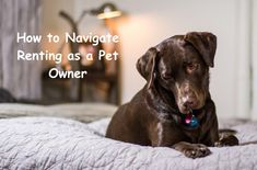 How to Navigate Renting as a Pet Owner #petowner #dog #cat #renting Meaning Of Calm, Dog Training Classes, Separation Anxiety, Dog Crate, Pet Care, Best Dogs, Labrador Retriever, Renting, Pets