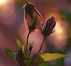 . Wild Roses. by Lynn E. Harvey on 500px