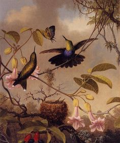 TROPICALIZER: Martin Johnson Heade // Orchids and Hummingbirds