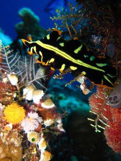 Colorful Flatworm, via Flickr.