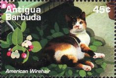 Antigua and Barbuda - They have beautiful cat stamps
