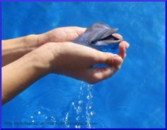 Small and young dolphin pictures