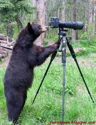 Animals and Cameras Mashup | Friday Foto Funnies