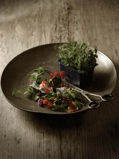 Big-name chefs go crazy when they taste the micro-vegetables known as cresses. A high-tech cultivation technology from the Dutch company Koppert Cress.