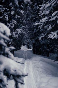 Wintery Trail