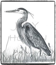 Blue Heron (2012) .  This is one of my older ink drawings but has been well received and used in logos from Great Britain to rural British Columbia