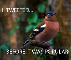 New Funny Bird Pictures Humor Hilarious Ideas Funny Birds, Funny Animals, Talking Animals, I Love To Laugh, Make Me Smile, Funny Bird Pictures, Funny Cute, Super Funny, I Laughed