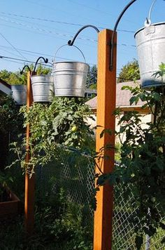 Upside down tomatoes, could paint the metal buckets to dress them up. or maybe just put a hanging basket of flowers around our garden.
