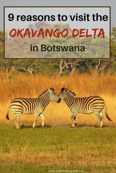9 Reasons to visit the Okavango Delta in Botswana. Highlights of Botswana. Travel in Africa.